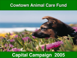 Cowtown Animal Care Fund