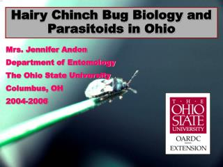 Hairy Chinch Bug Biology and Parasitoids in Ohio