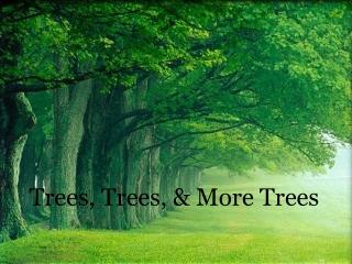 Trees, Trees, & More Trees