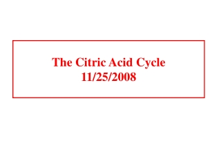 The Citric Acid Cycle 11/25/2008