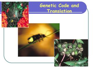 Genetic Code and Translation