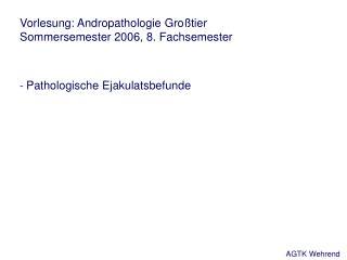 Vorlesung: Andropathologie Großtier Sommersemester 2006, 8. Fachsemester -  Pathologische Ejakulatsbefunde
