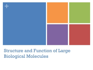 Structure and Function of Large Biological Molecules