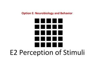 Option E: Neurobiology and Behavior
