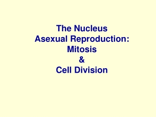 The Nucleus Asexual Reproduction:  Mitosis  &  Cell Division