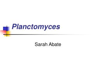 Planctomyces