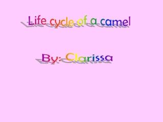 By: Clarissa