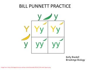 BILL PUNNETT PRACTICE