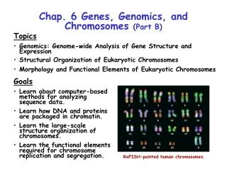 Chap. 6 Genes, Genomics, and Chromosomes  (Part B)