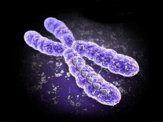 Chromosomal Landscapes