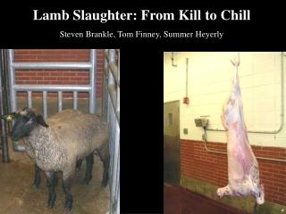 Lamb Slaughter: From Kill to Chill Steven Brankle, Tom Finney, Summer Heyerly