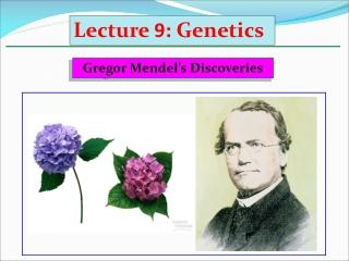 Gregor Mendel's Discoveries