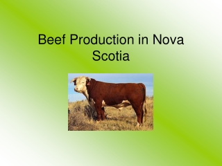 Beef Production in Nova Scotia
