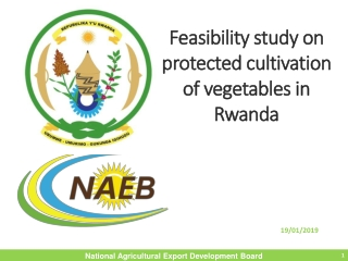 Feasibility study  on  protected  cultivation of  vegetables  in Rwanda