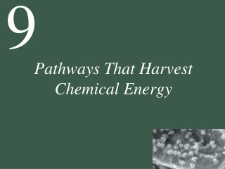 Pathways That Harvest Chemical Energy