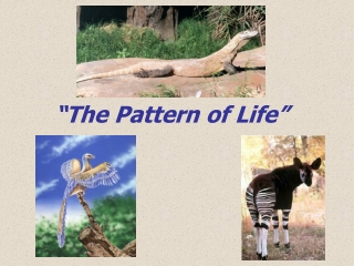 """The Pattern of Life"""