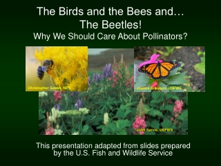 The Birds and the Bees and… The Beetles! Why We Should Care About Pollinators?