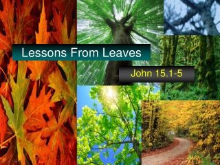 Lessons From Leaves