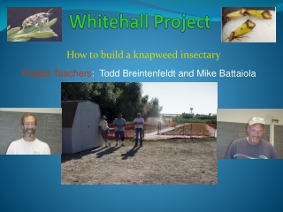 Whitehall Project