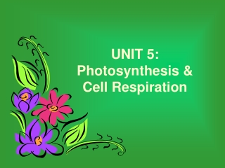 UNIT 5: Photosynthesis & Cell Respiration