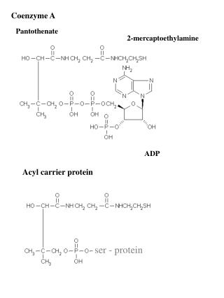 Coenzyme A