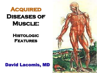 Acquired Diseases of Muscle: Histologic Features