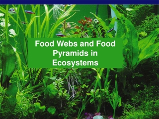 Food Webs and Food Pyramids in Ecosystems