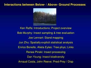 Interactions between Below- / Above- Ground Processes