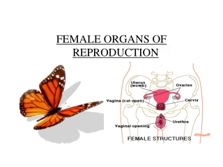 FEMALE ORGANS OF REPRODUCTION