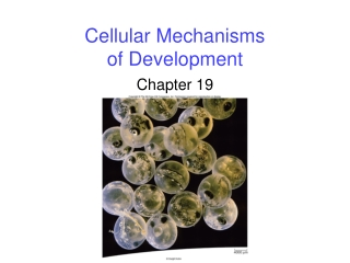 Cellular Mechanisms of Development