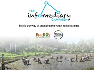 This is our way of engaging the youth in rice farming