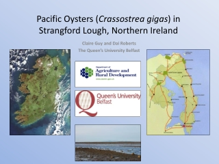 Pacific Oysters ( Crassostrea gigas ) in Strangford Lough, Northern Ireland