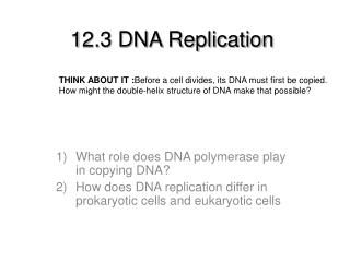 12.3 DNA Replication