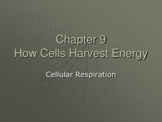 Chapter 9 How Cells Harvest Energy