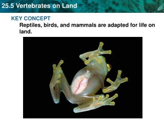 KEY CONCEPT  Reptiles, birds, and mammals are adapted for life on land.