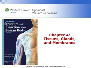 Chapter 4: Tissues, Glands,  and Membranes