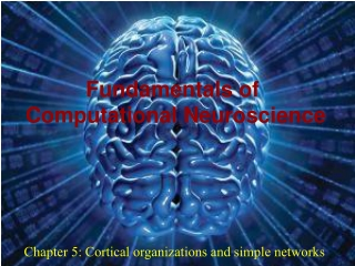 Chapter 5: Cortical organizations and simple networks