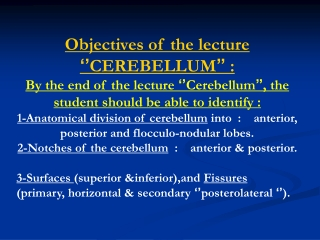Objectives of the lecture  '' CEREBELLUM ''  :
