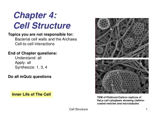 Chapter 4: Cell Structure