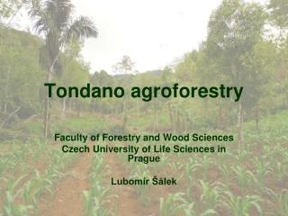 Tondano agroforestry