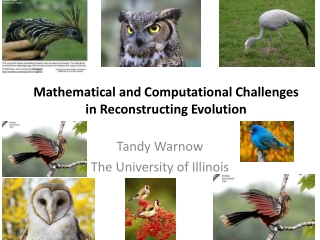 Mathematical and Computational Challenges in Reconstructing Evolution