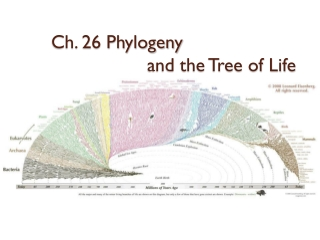 Ch. 26 Phylogeny  and the Tree of Life