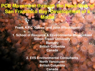 PCB Movement through the Food-Web of San Francisco Bay: Development of a Model