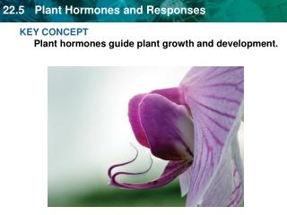 KEY CONCEPT Plant hormones guide plant growth and development.