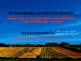 BT Cry1Ab/1Ac  金标转基因检测试纸条项目 (Rapid Test for the Detection of the GMO Crop —— BT Cry 1Ab/1Ac
