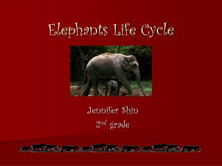 Elephants Life Cycle