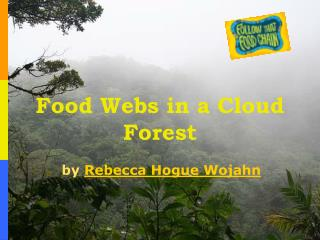 Food Webs in a Cloud Forest