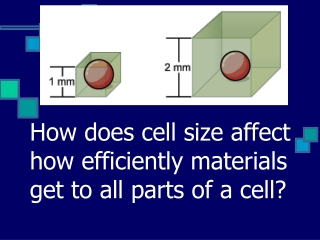 How does cell size affect how efficiently materials get to all parts of a cell?