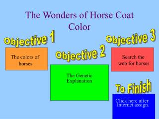 The Wonders of Horse Coat Color