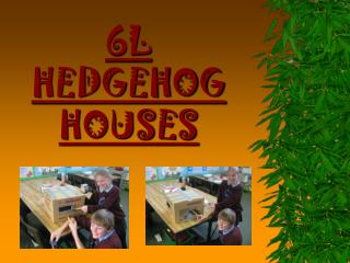 6L HEDGEHOG HOUSES